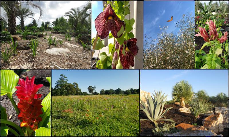 Houston Botanic Garden: The Countdown Begins! 3