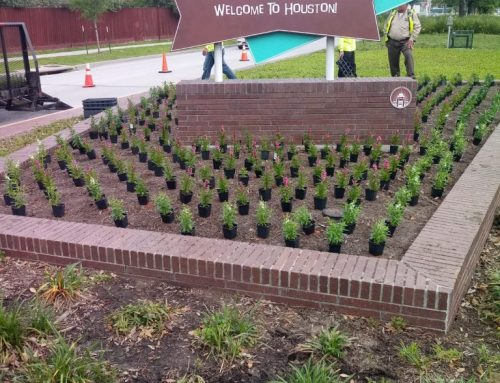 Family-owned Landscaping company plants and cleans around the Hobby District